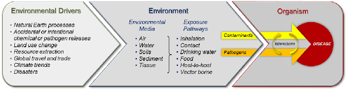 Diagram showing relationship among environmental drivers and exposure to disease agents