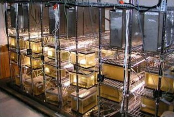 Stacks of experimental fish tanks in side a laboratory trailer