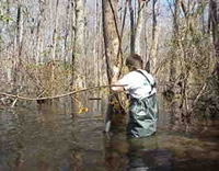 USGS scientist sampling sediments for organotin analysis in a beaver pond on Red Bank Creek, Lexington County, South Carolina. The pond is downstream of the spill site.