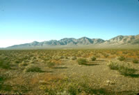 Desert vegetation at the Amargosa Desert Research Site
