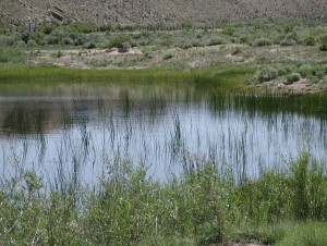 Even though this vernal pool in Seminoe State Park, Wyoming will not be wet all year long, it forms critical habitat for many species of wildlife.