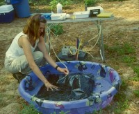 A USGS scientist is monitoring a bladder used to hold the injection fluid during a single-well tracer test designed to study the transport on ammonium in ground water on Cape Cod, Massachusetts. The bladder is placed in a small pool of water to control the temperature of the injection fluid during the test.