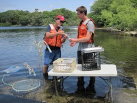 USGS scientists collecting water-quality samples from shallow groundwater under Ashumet Pond.
