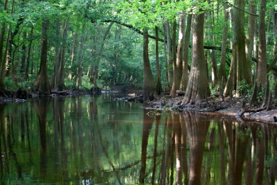 Cedar Creek in Congaree National Park, SC, showing old growth bottomland hardwood forest