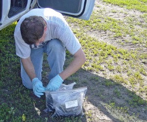 A USGS scientist bagging up samples of biosolids