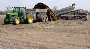 Biosolids being transferred from a dump truck to a spreader.