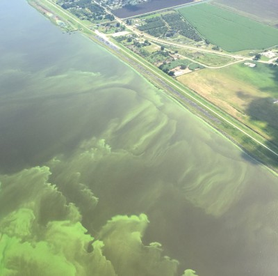 Aerial photograph of a 2016 cyanobacterial bloom on Lake Okeechobee, Florida_