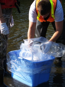USGS scientists collected water samples in plastic bag to prevent contamination
