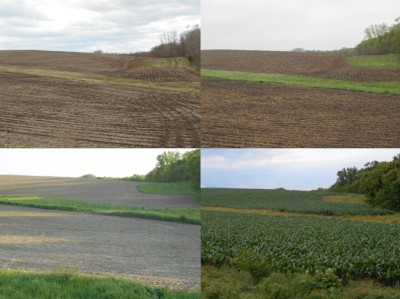 Four photos that show the progression growth of a corn field