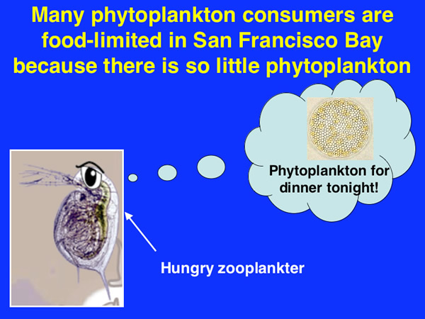 Many phytoplankton consumers are food-limited in the Bay because there is so little phytoplankton