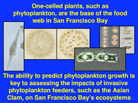 One-celled plants, such as phytoplankton, are the base of the food web in San Francisco Bay.  The ability to predict phytoplankton growth is key to assessing the impacts of invasive phytoplankton feeders, such as the Asain Clam, on San Francisco Bay's ecosystem.