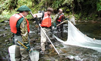 USGS scientists electrofishing on the Lookout Creek near the Blue River, OR. The fish they collected were analyzed for mercury content and added to the data base that the National Fish Mercury Model is based on.