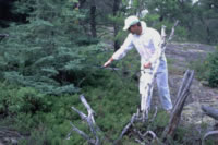 Scientist in a white protective suit spraying 202Hg solution on plants