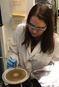 USGS scientist lifting a filter caked with sediment that's on top of a filter plate used for filtering suspended sediment from water samples.