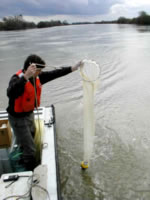 A scientist using a net to collect a sample of zooplankton from delta channel.